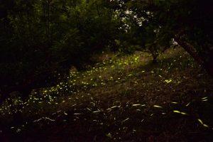 苗栗泰安花石間景觀露營區,露營地,螢火蟲